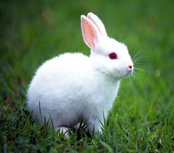 Resultado de imagem para coelho da pascoa